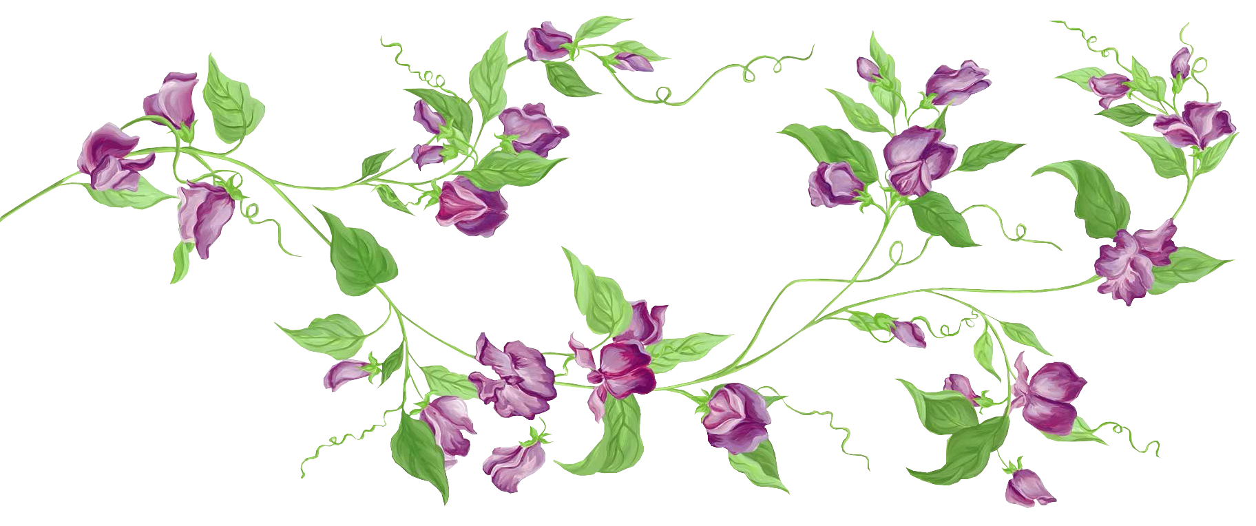collection of vine. Vines clipart purple flower