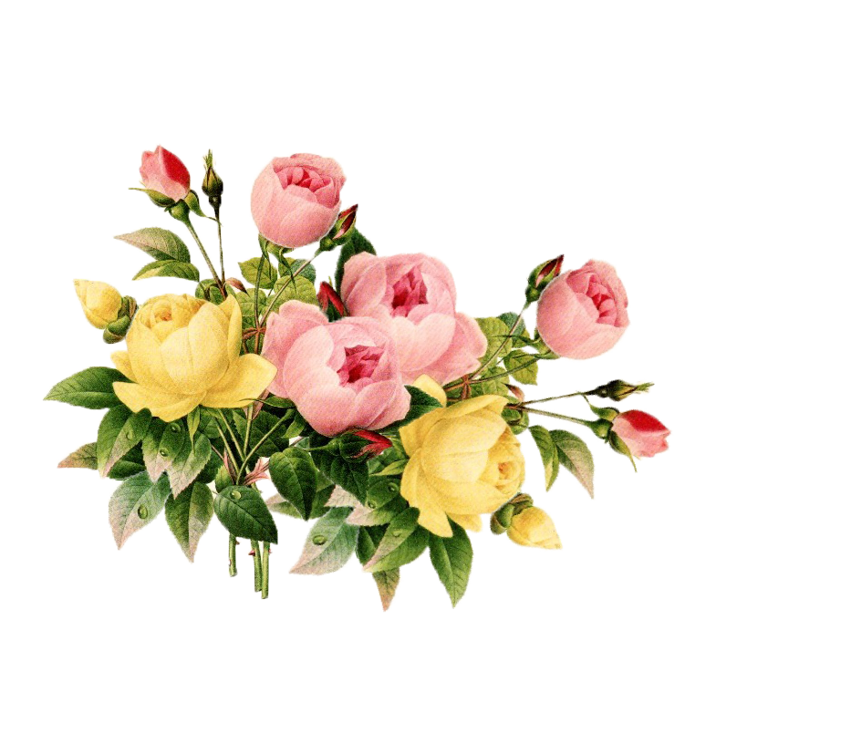 Vintage flower png. Clipart best flowers pinterest