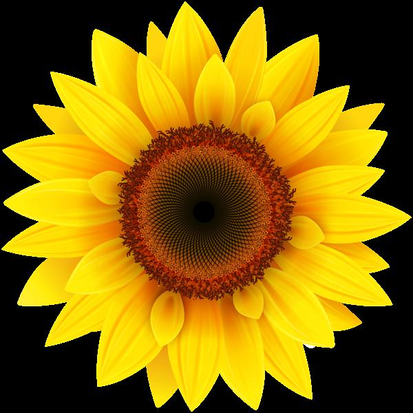 Sunflower png picture pinterest. Poppy clipart stemmed flower