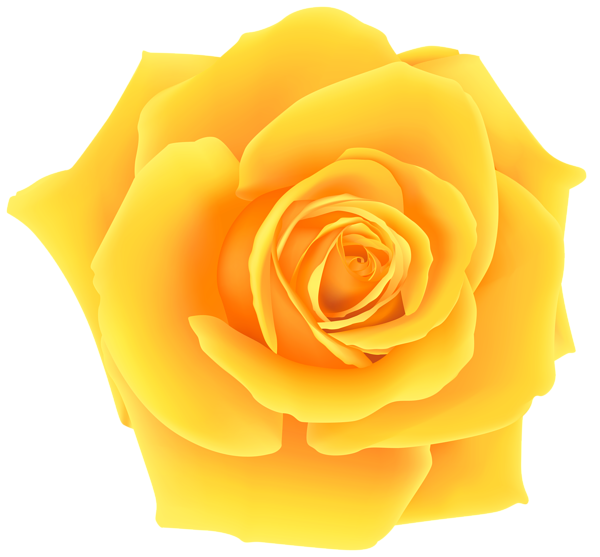 Yellow png clip art. Rose clipart easy