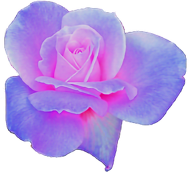 Clipart flowers aesthetic. Purple pink rose flower