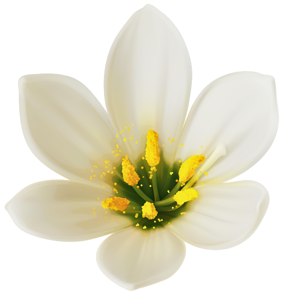 White flower clipart png. Image lilyum pinterest images
