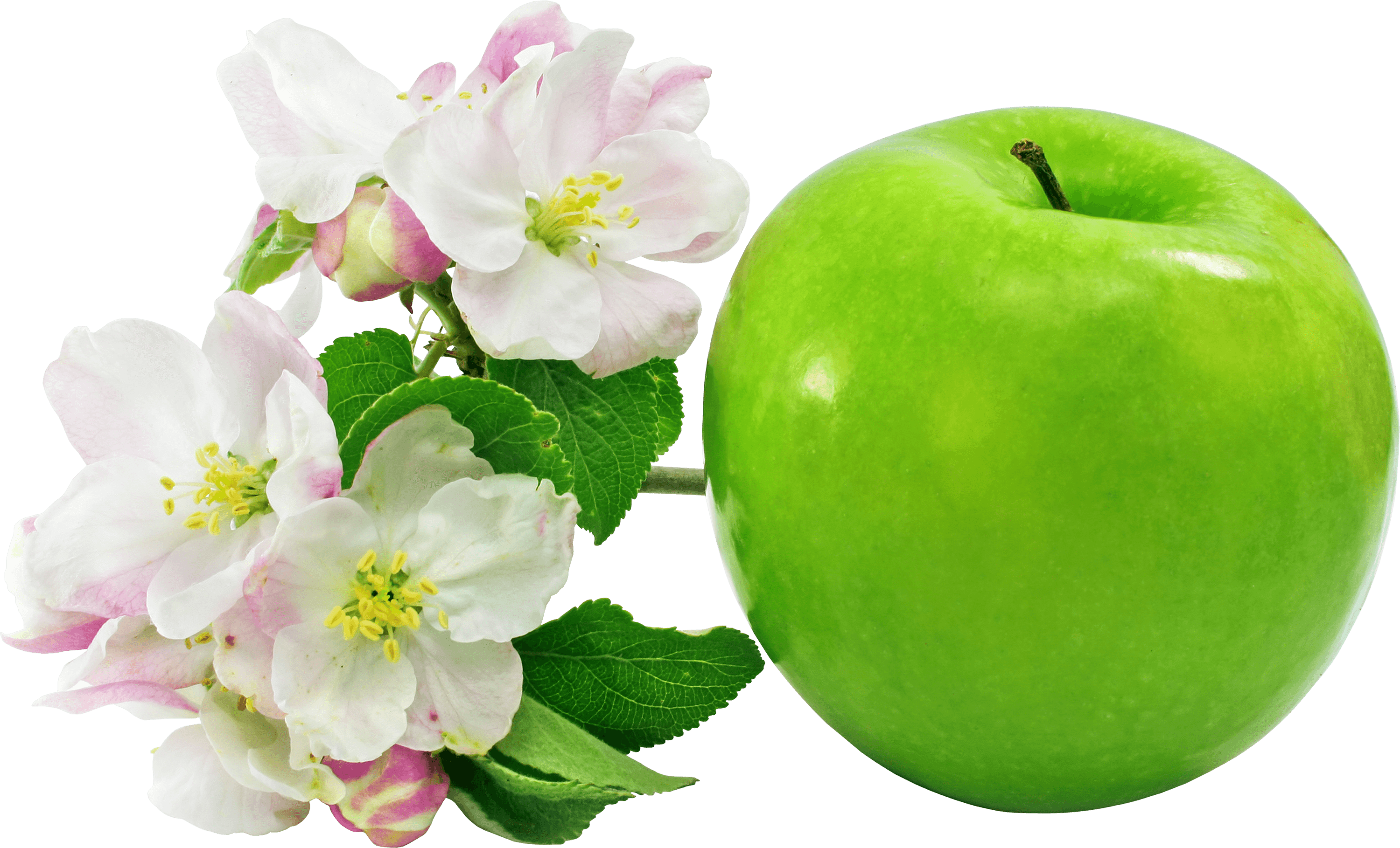 Apple flowers transparent stickpng. Green flower png