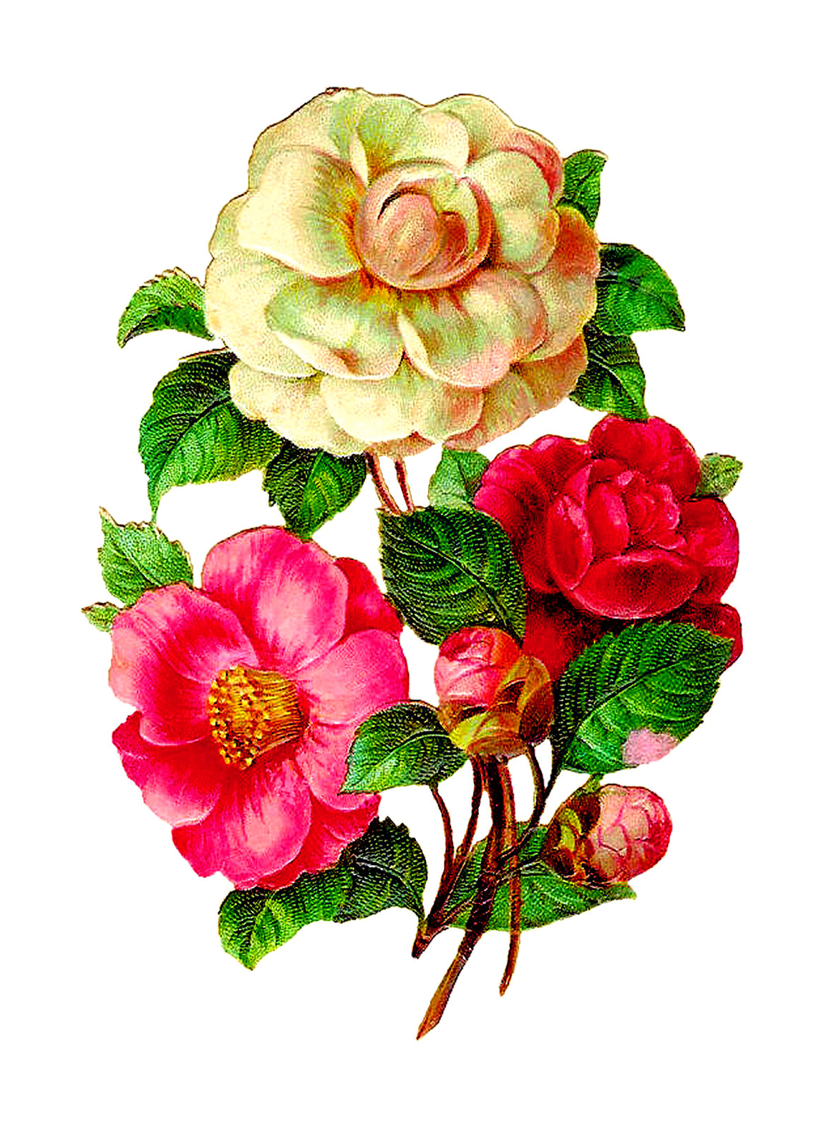 Cotton clipart printable. Afbeeldingsresultaat voor vintage flowers