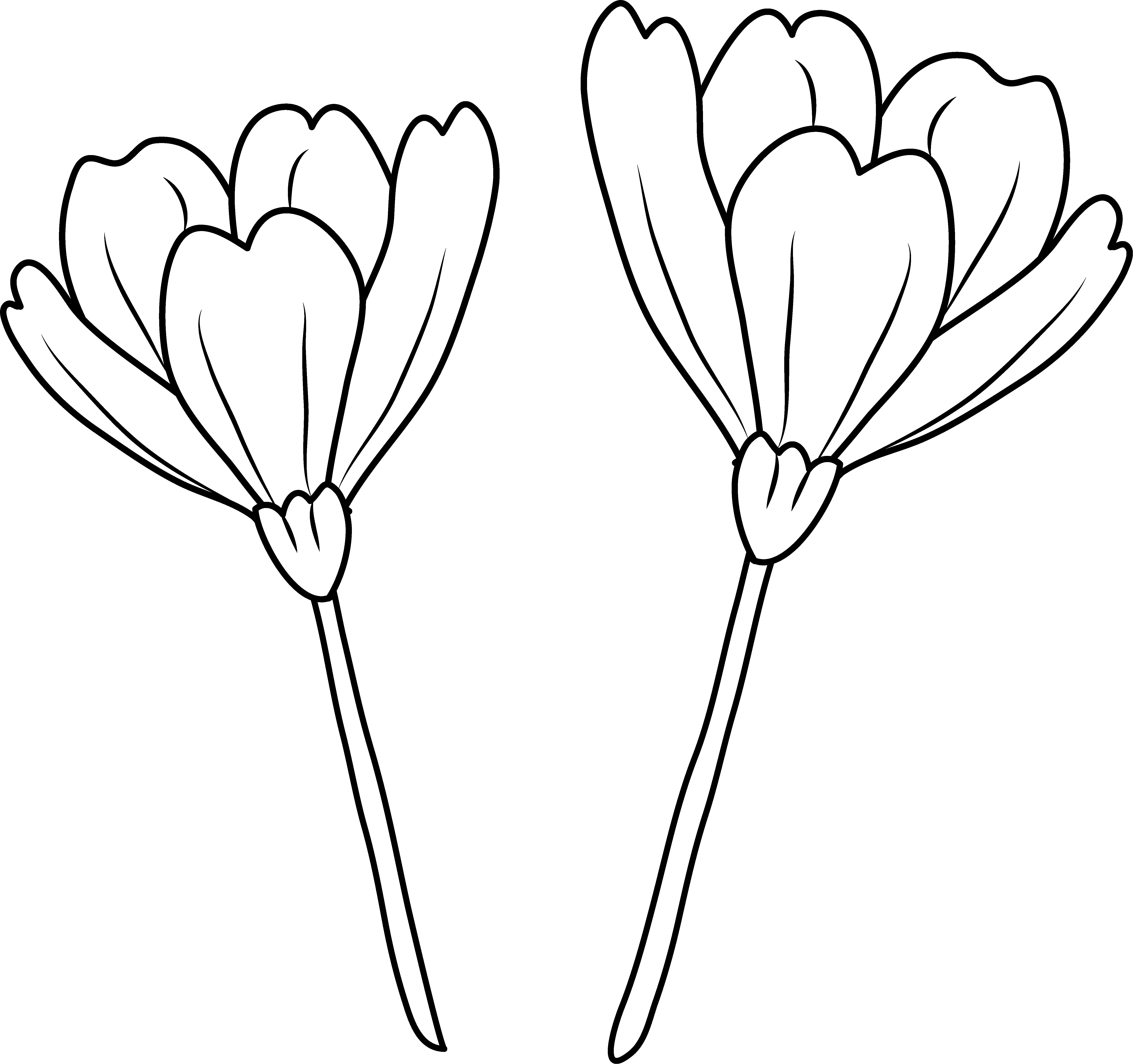 Poppy clipart three. Flowers coloring page free