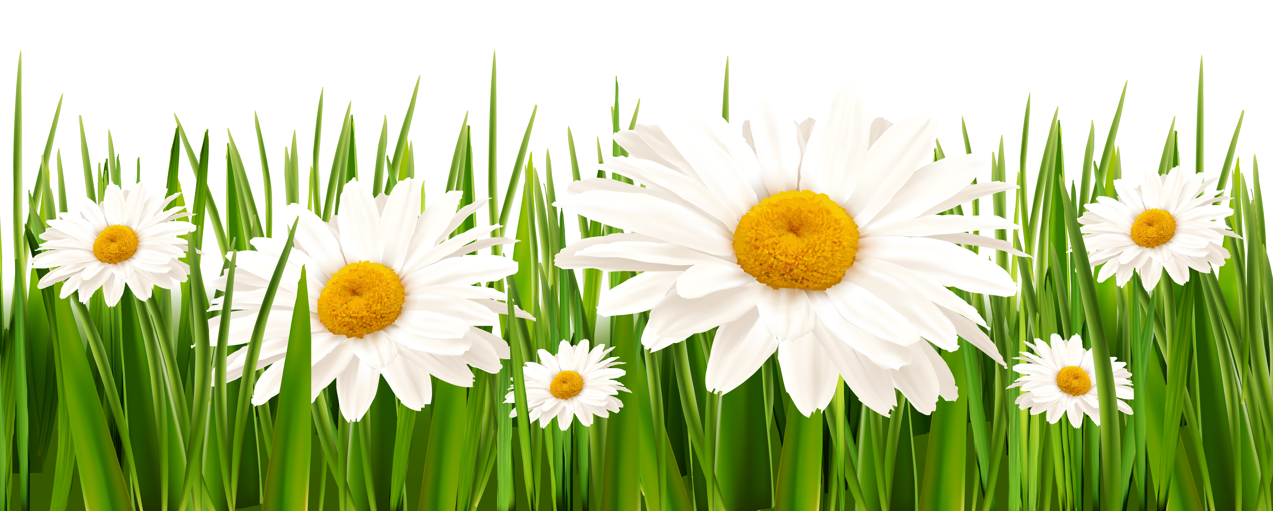 And white flowers png. Clipart grass plains