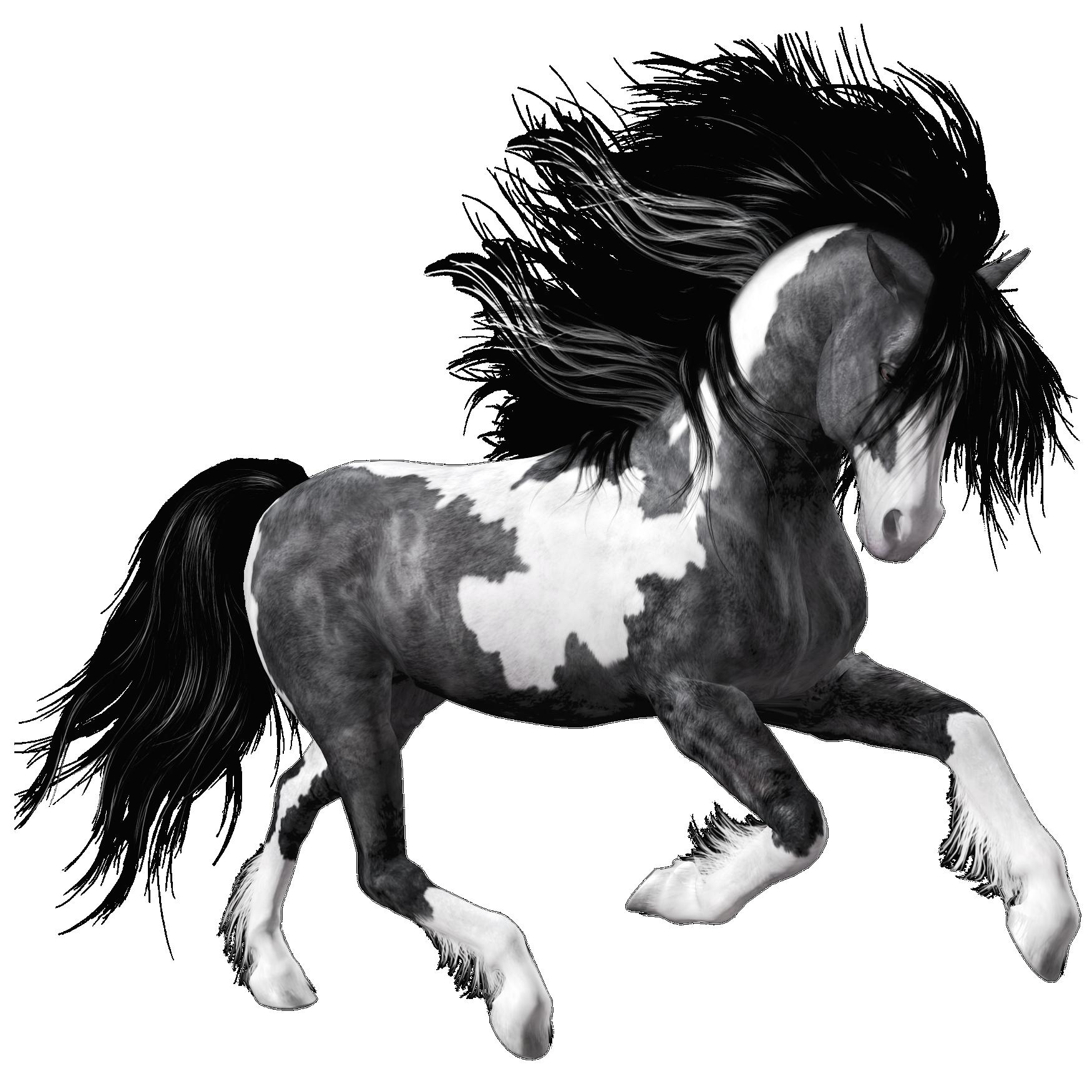 White black horse png. Horses clipart banner