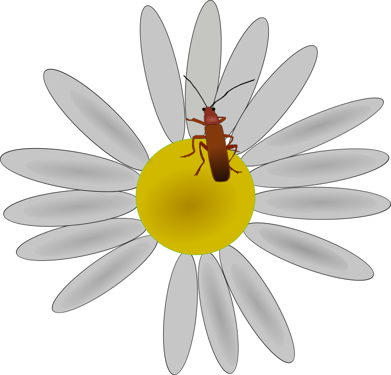 Clipart flowers insect. Bug on a flower