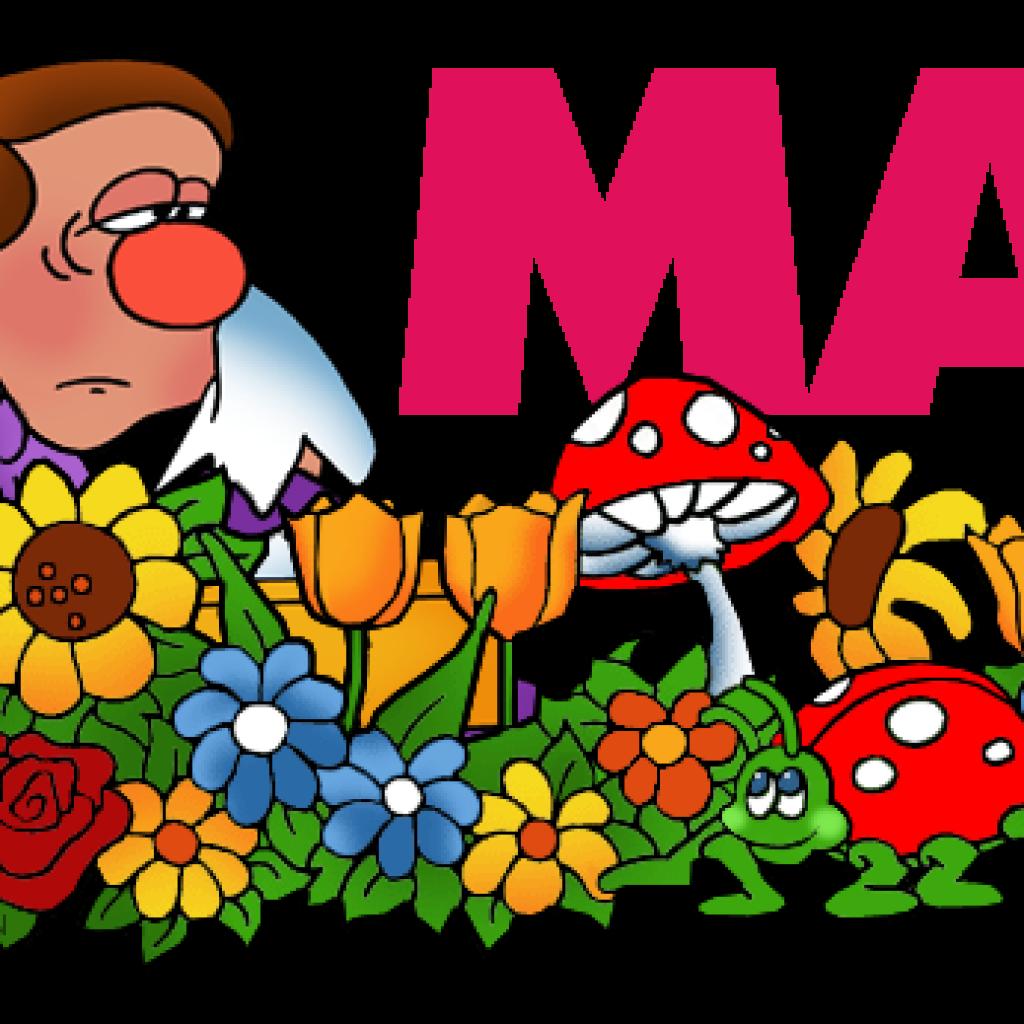 Mayflower many flower