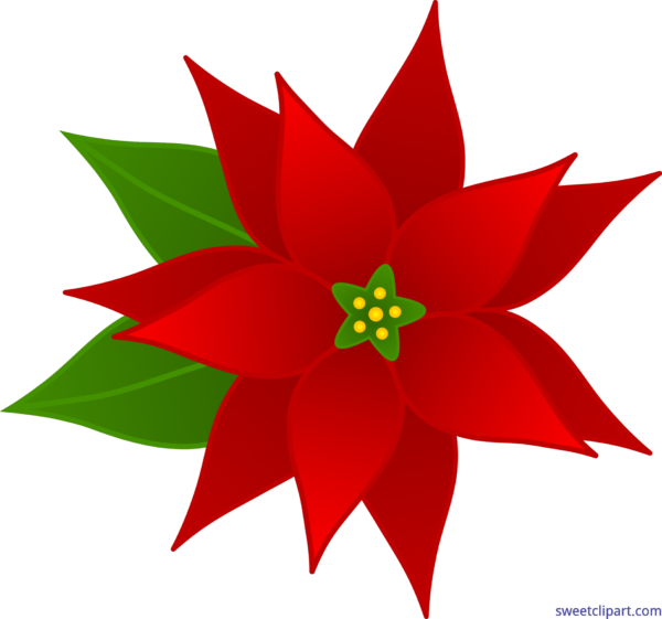 poinsettias clipart single