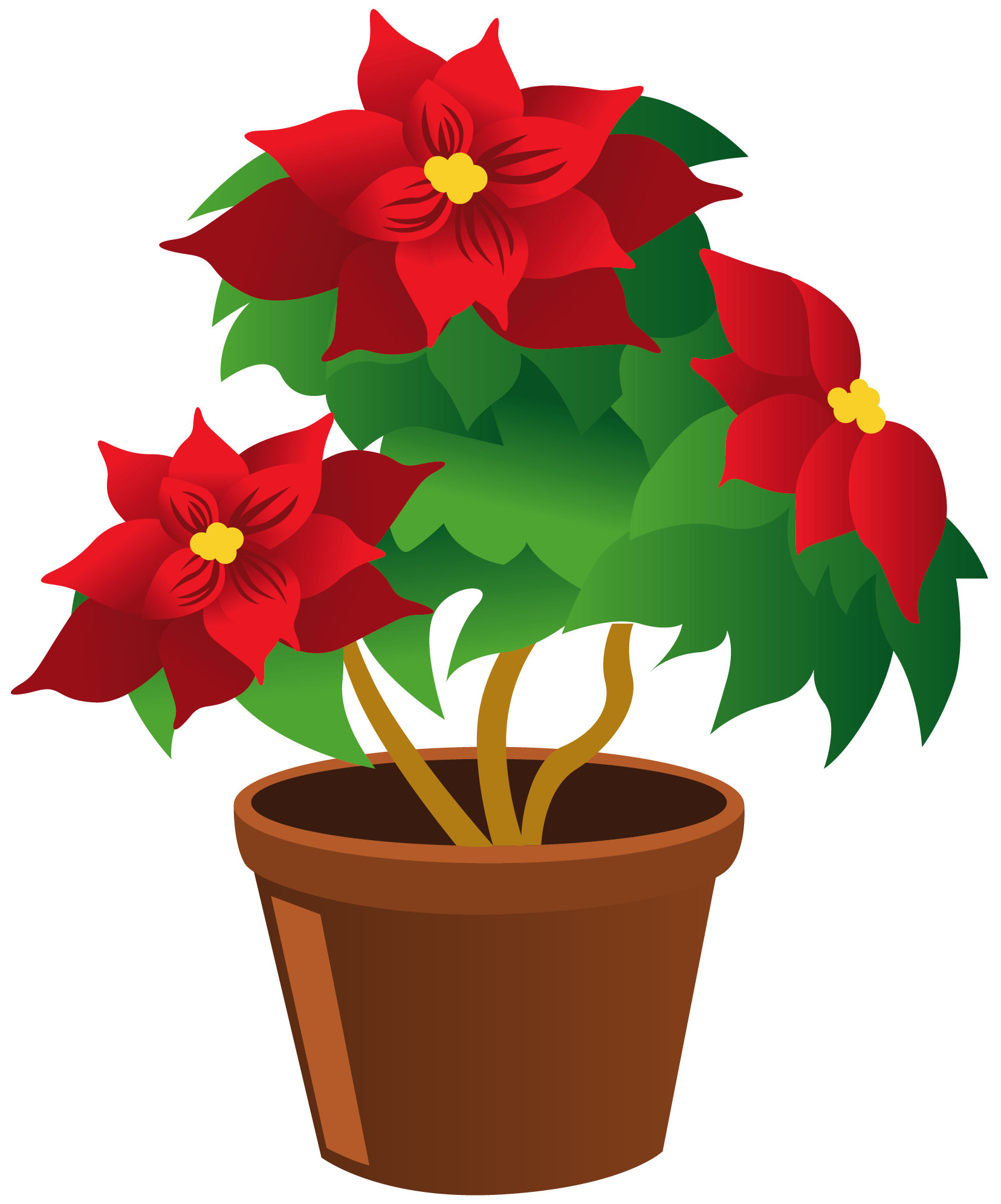 Plants clipart potted plant. Poinsettia pot png my