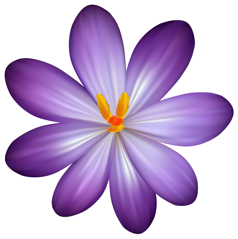 Clipart flowers purple. Crocus flower png image