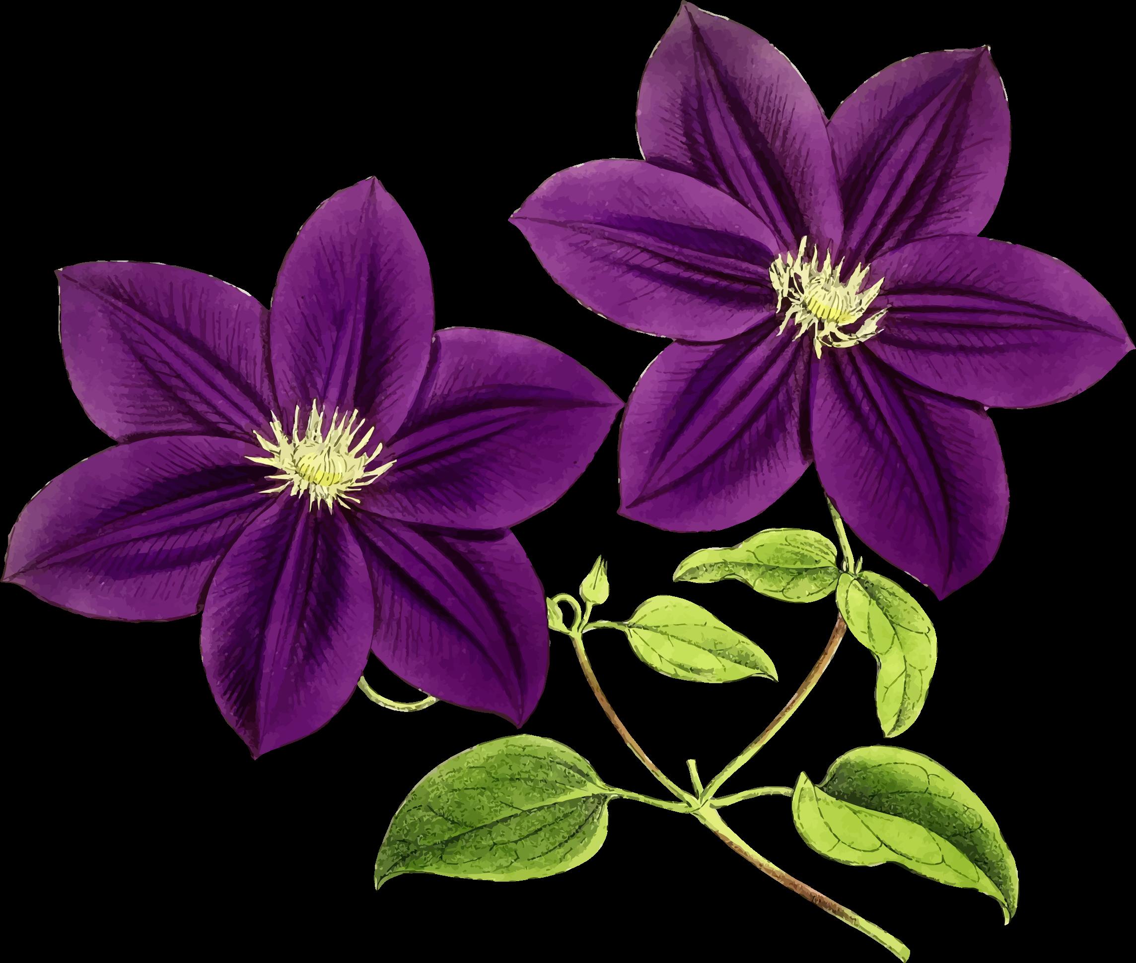 Big image png. Clipart flowers purple