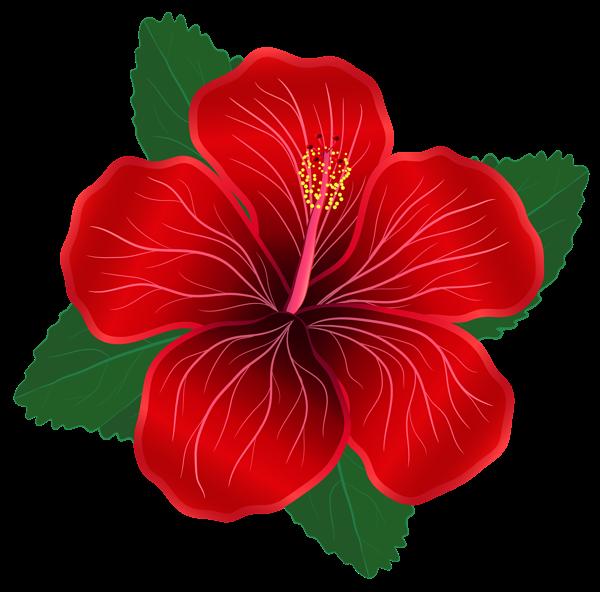 Hibiscus moana
