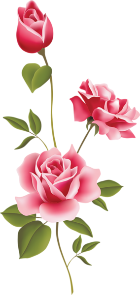 Clipart roses mini rose. Pink clip art spring