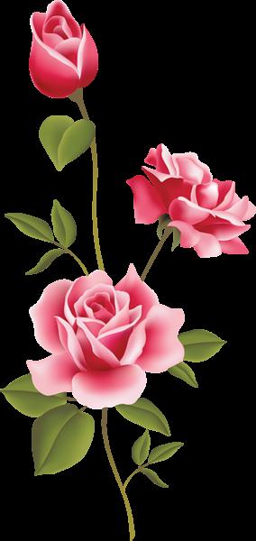 Roses clip art spring. Clipart rose pink rose