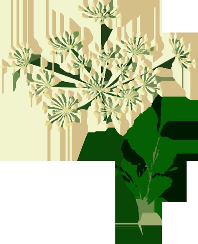 Graphic design pinterest clip. Plants clipart herb
