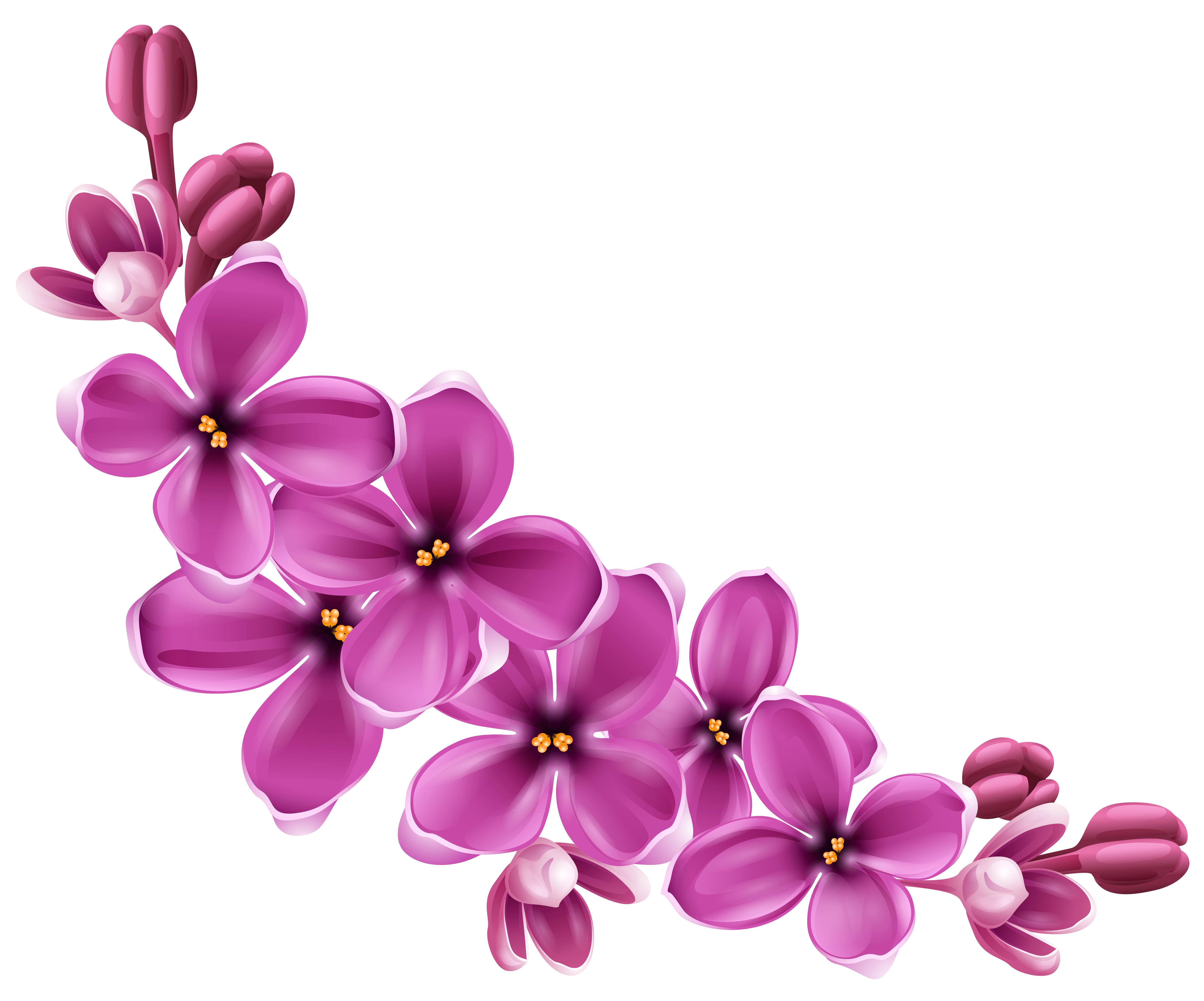 Spring flowers png pictures. Floral clipart transparent background