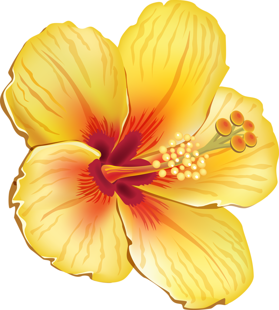 a d dfa. Flower clipart tropical