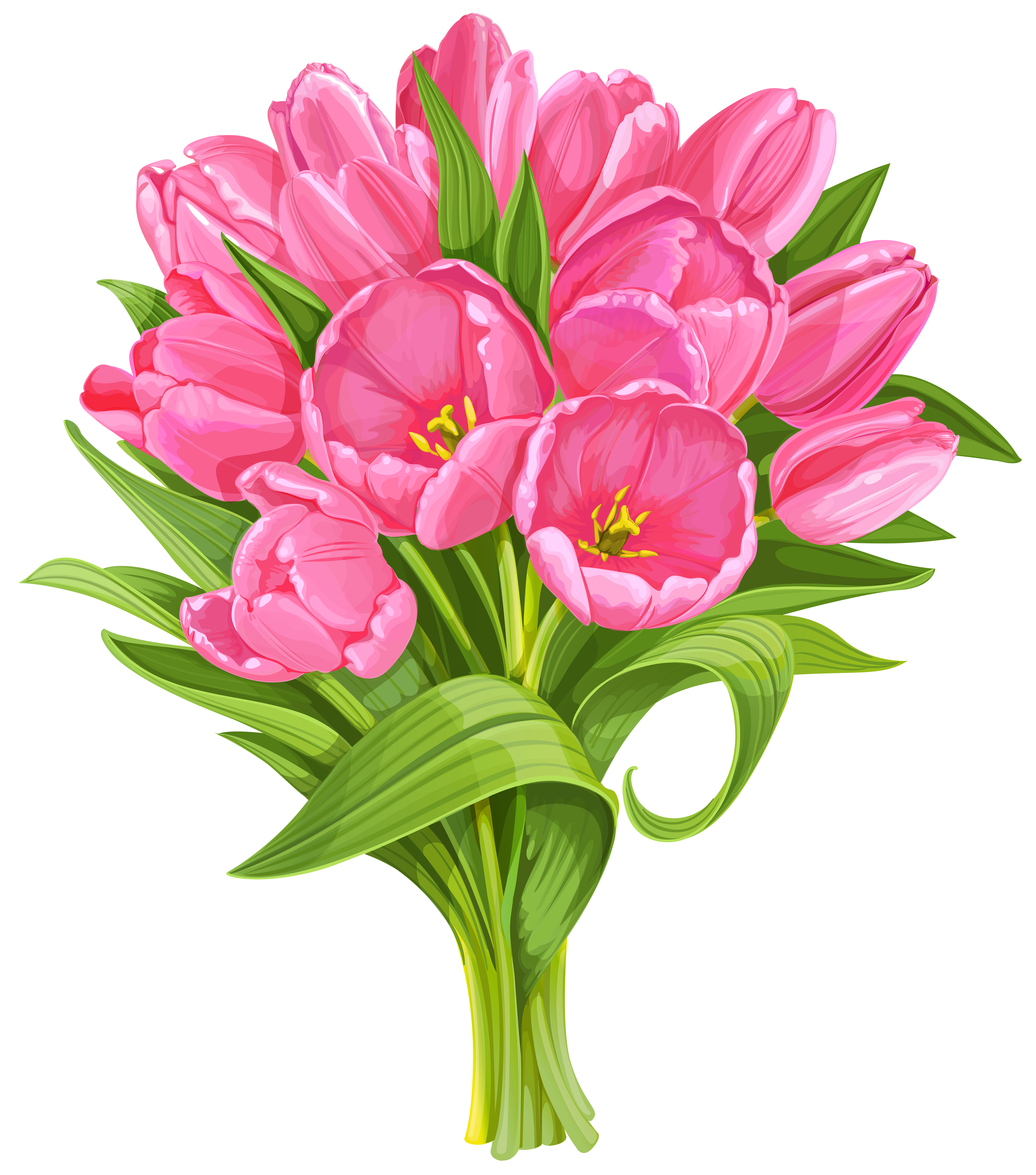 Tulip no flower cliparts. Daffodil clipart transparent background