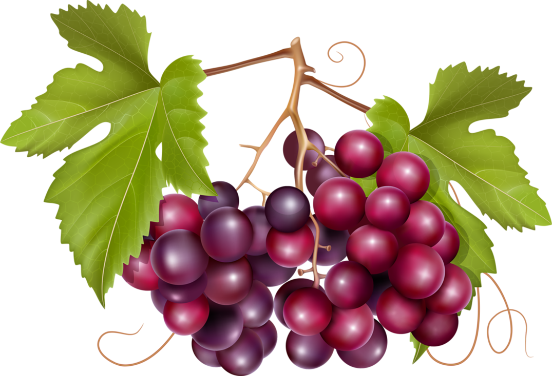 Pin by jadwiga on. Grape clipart fruit vegetable