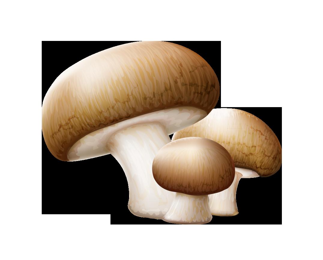 Common edible clip art. Mushrooms clipart button mushroom
