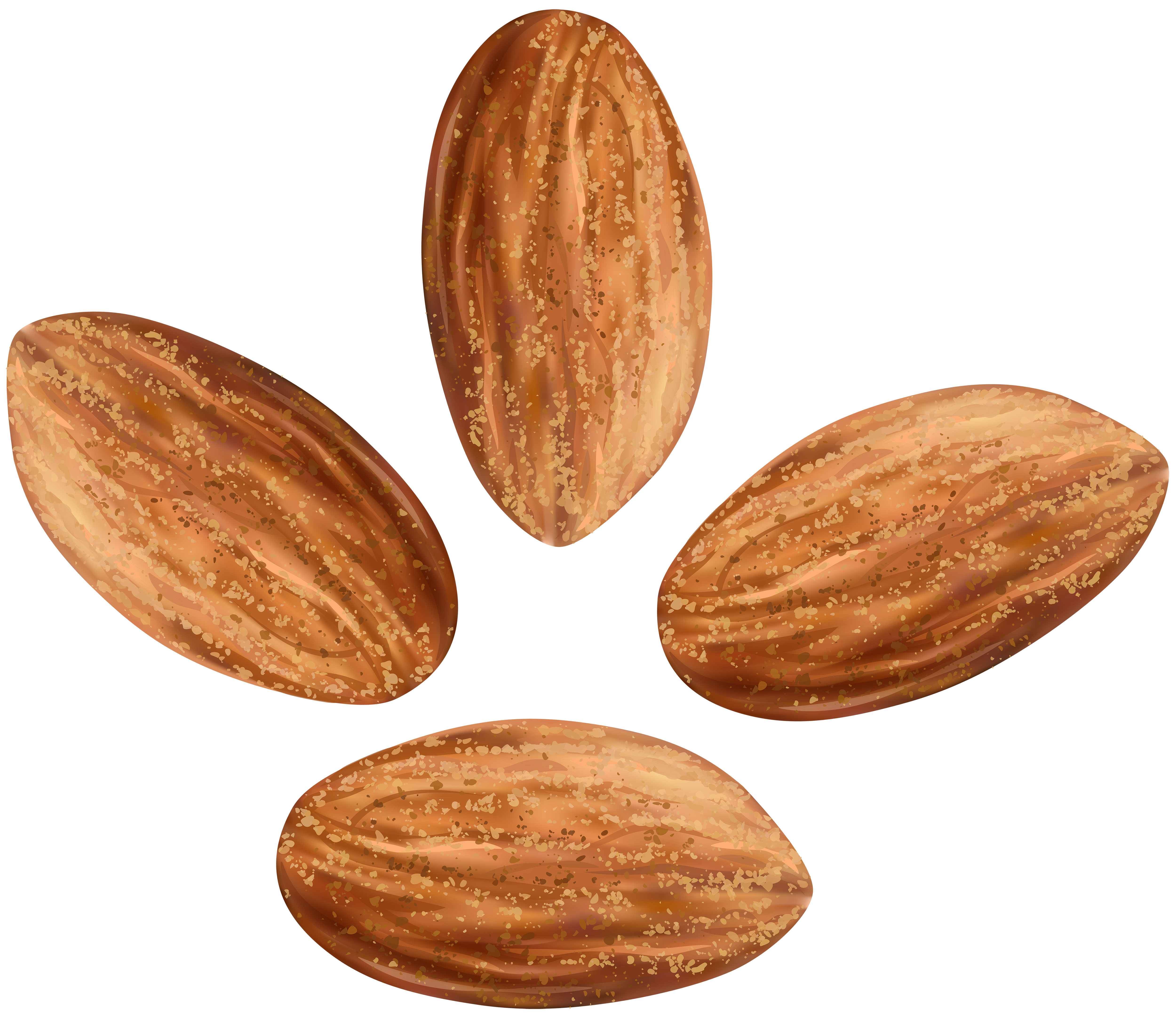 Almonds transparent clip art. Nuts clipart different seed