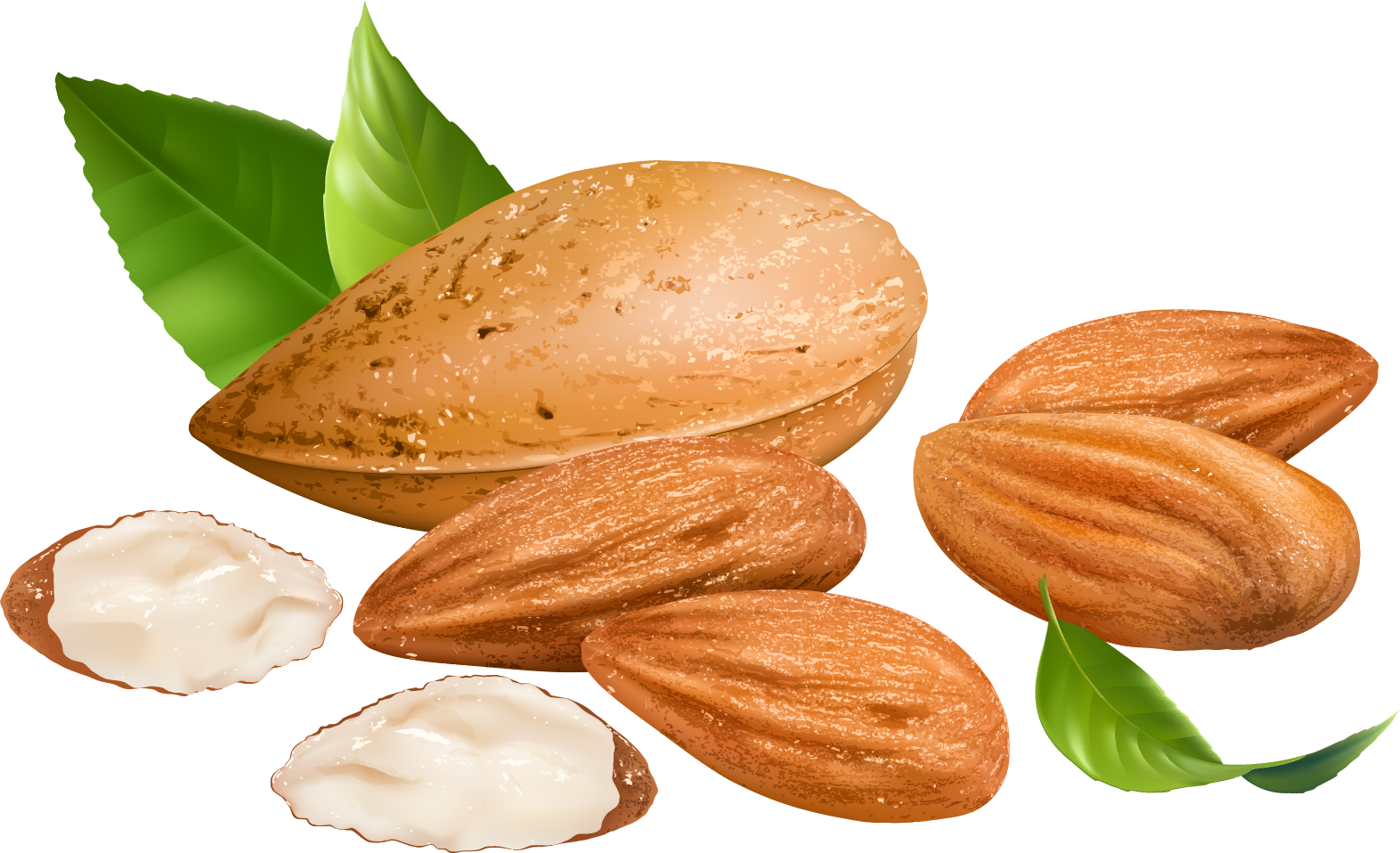 clipart food nuts