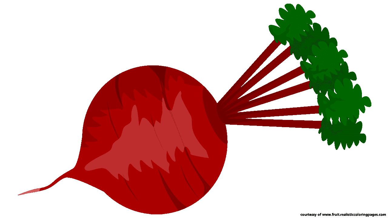 Tree clipart vegetable. Beetroot clip art beet