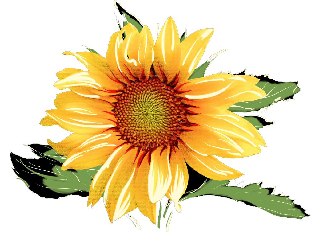 Clipart food watercolor. Common sunflower painting sunflowers