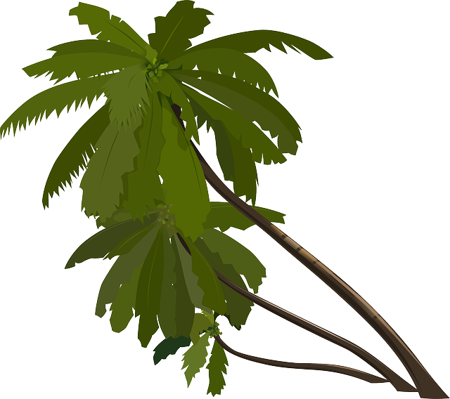 Plants clipart rainforest. Tropical forest gk by