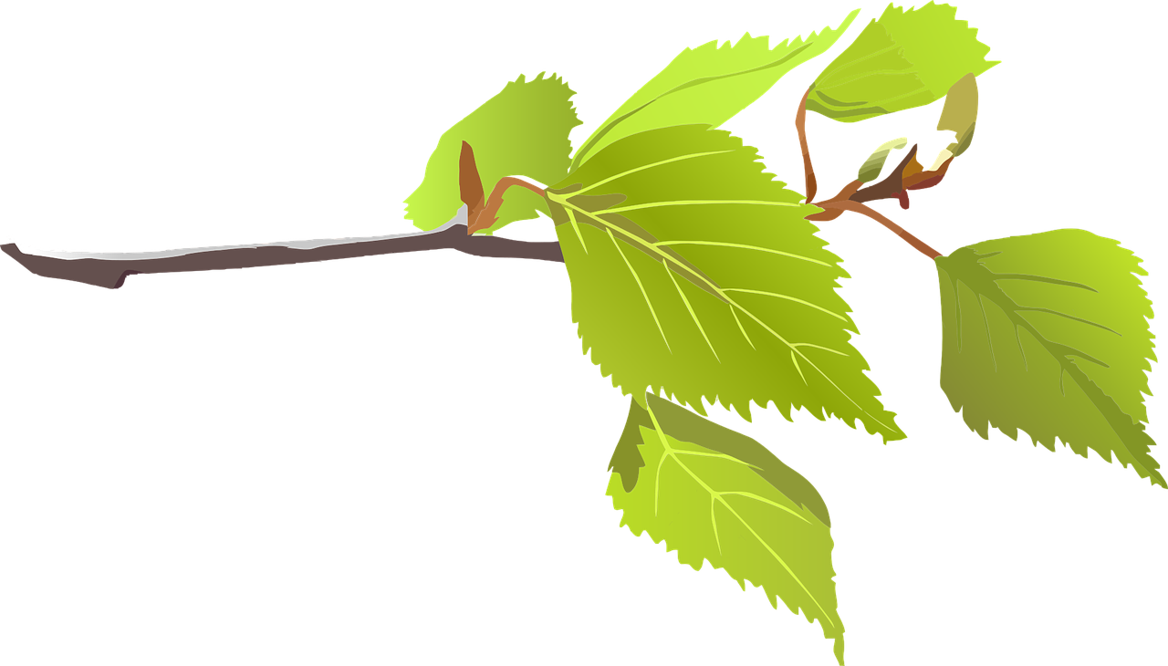 How to draw a. Leaf clipart twig