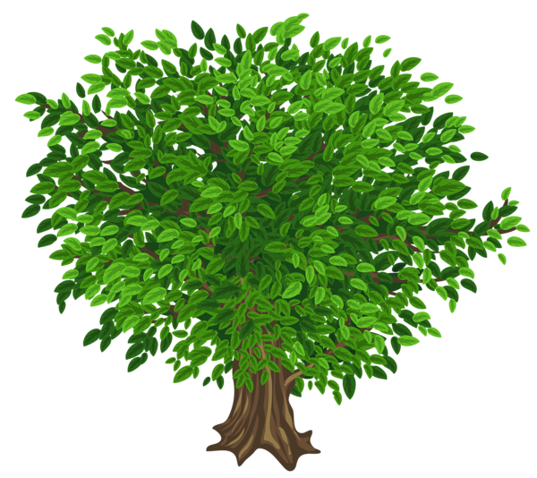 tree png. Woodland clipart green fern