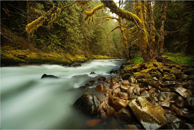 Nature clipart creek. Lush forest medium image
