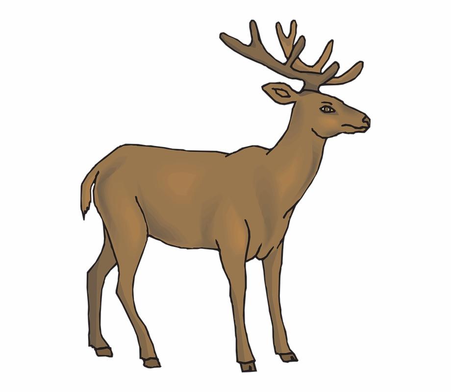 Gif free png images. Deer clipart forest deer