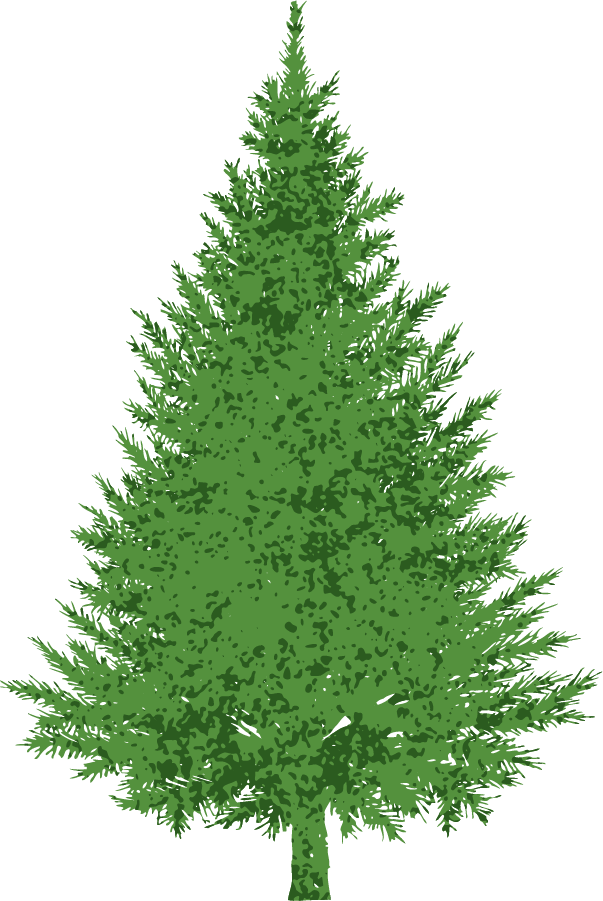 collection of tree. Clipart trees evergreen