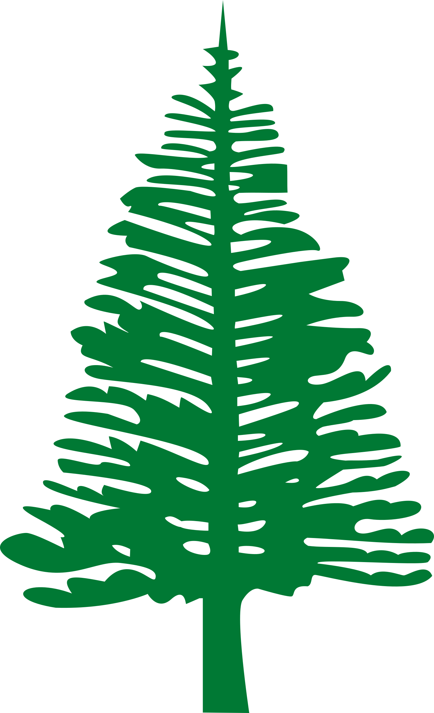 Norfolk island pine big. Tree clipart forest