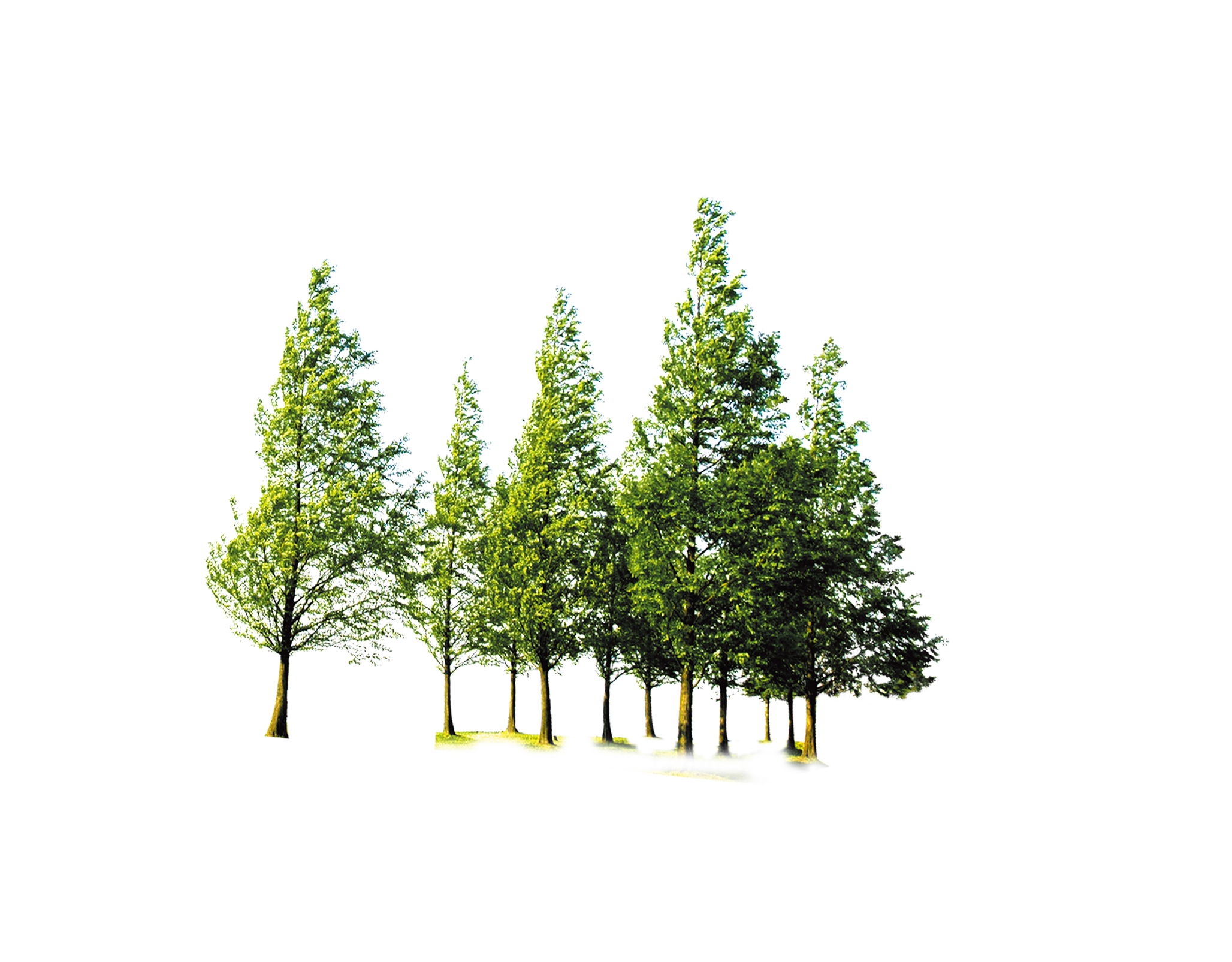 Tree computer trees png. Clipart forest file