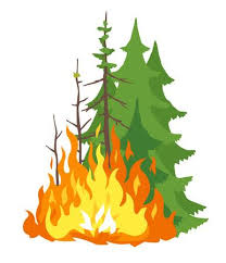Fire clipart forest fire. Burning restrictions reduced city