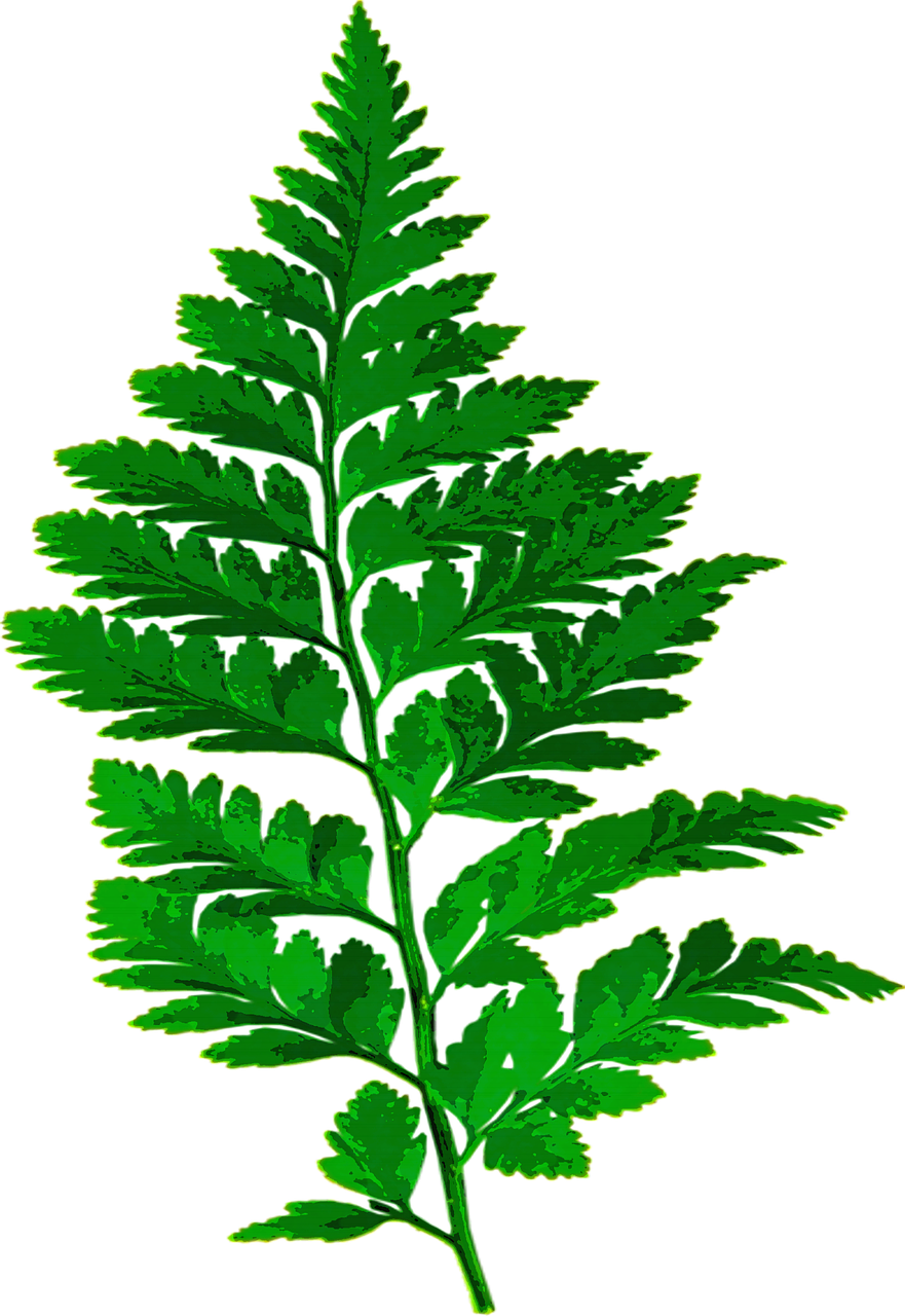 Woodland clipart leafy tree. Forest fern leaf nature