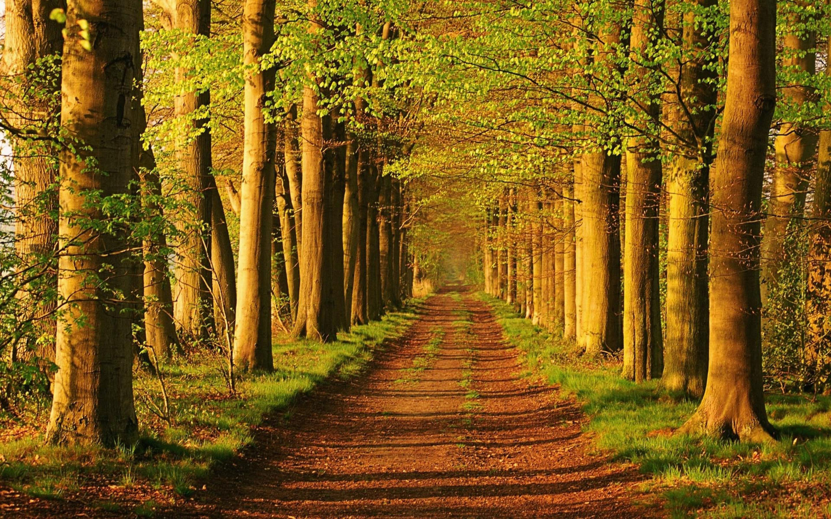 Landscape wallpaper gallery yopriceville. Trail clipart forest trail