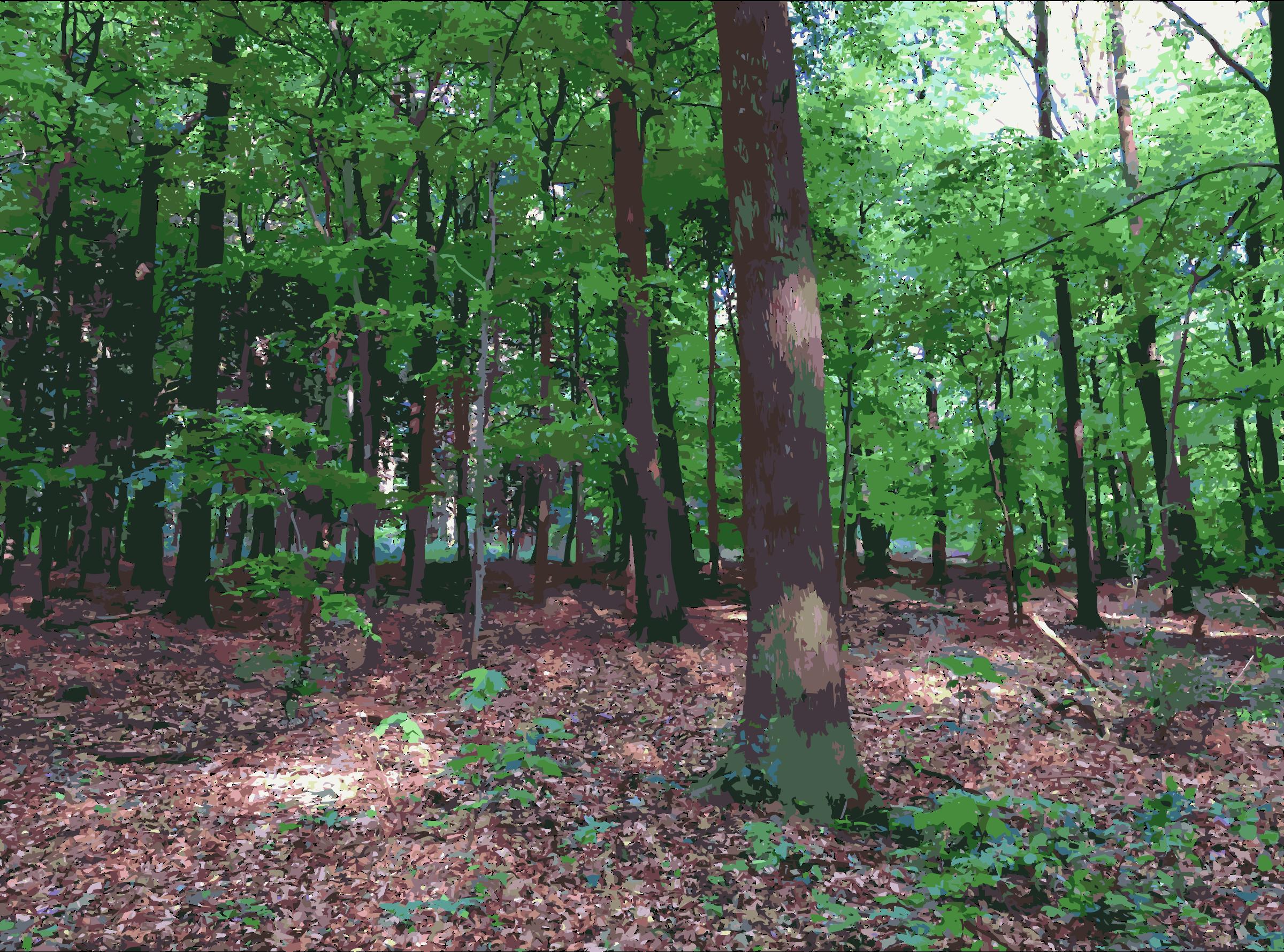 Lichtscheid forest again big. Woodland clipart natural vegetation