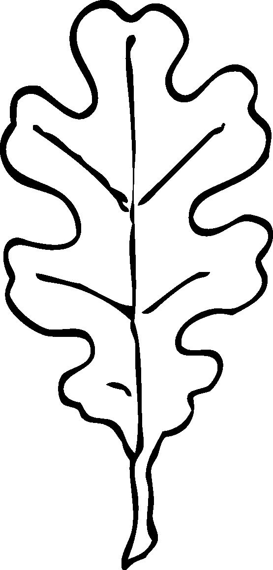 Oak clip art silhouette. Tree clipart colour