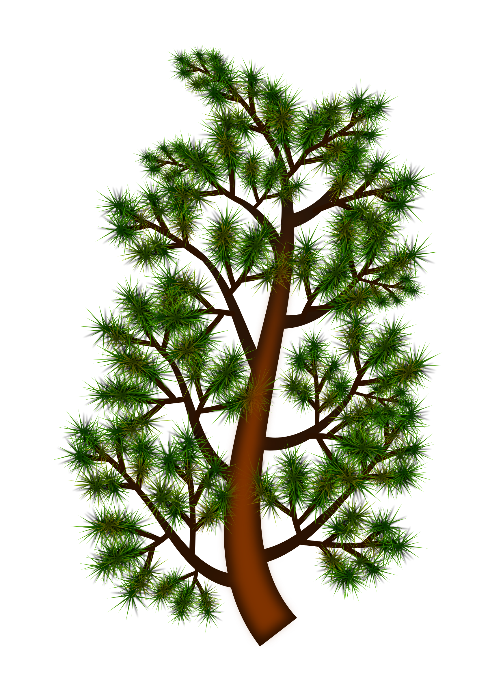 Clipart forest pine tree. Branch big image png