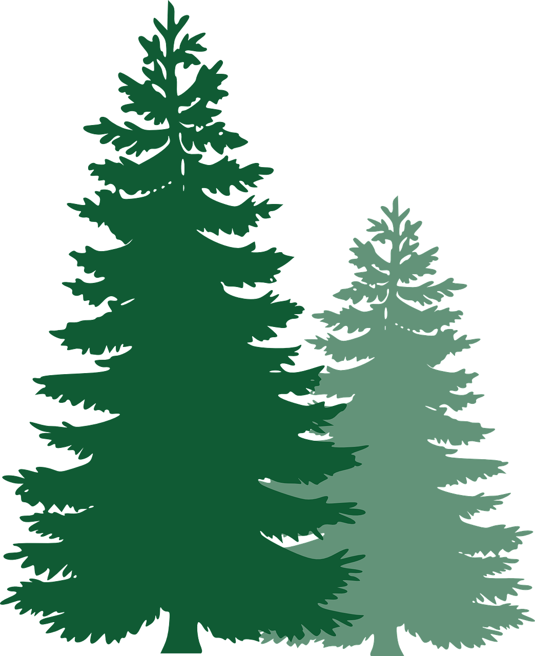Clipart forest pine tree. Trees spruce evergreen tr