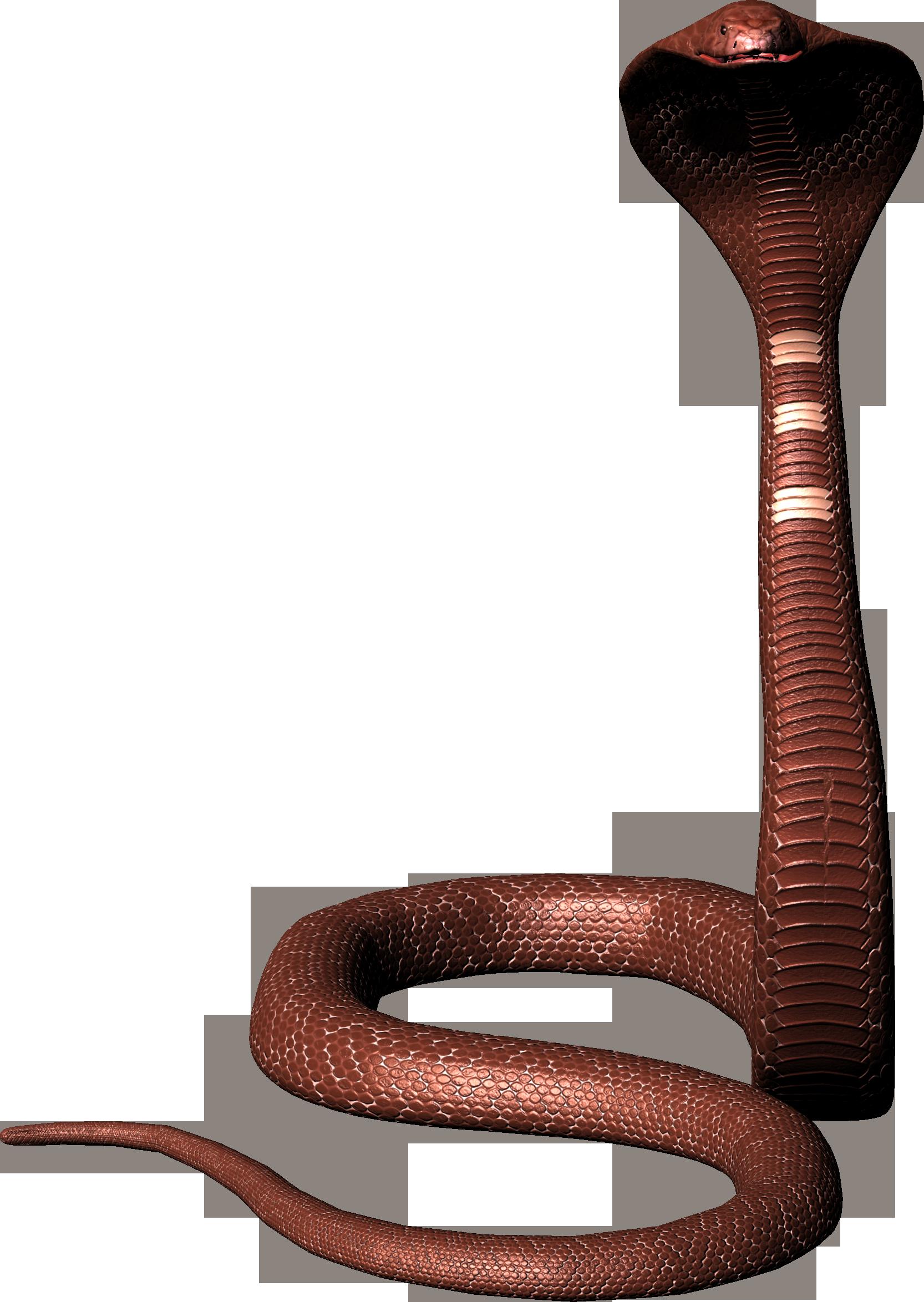 Cobra clipart snakeblack. Snake png image free