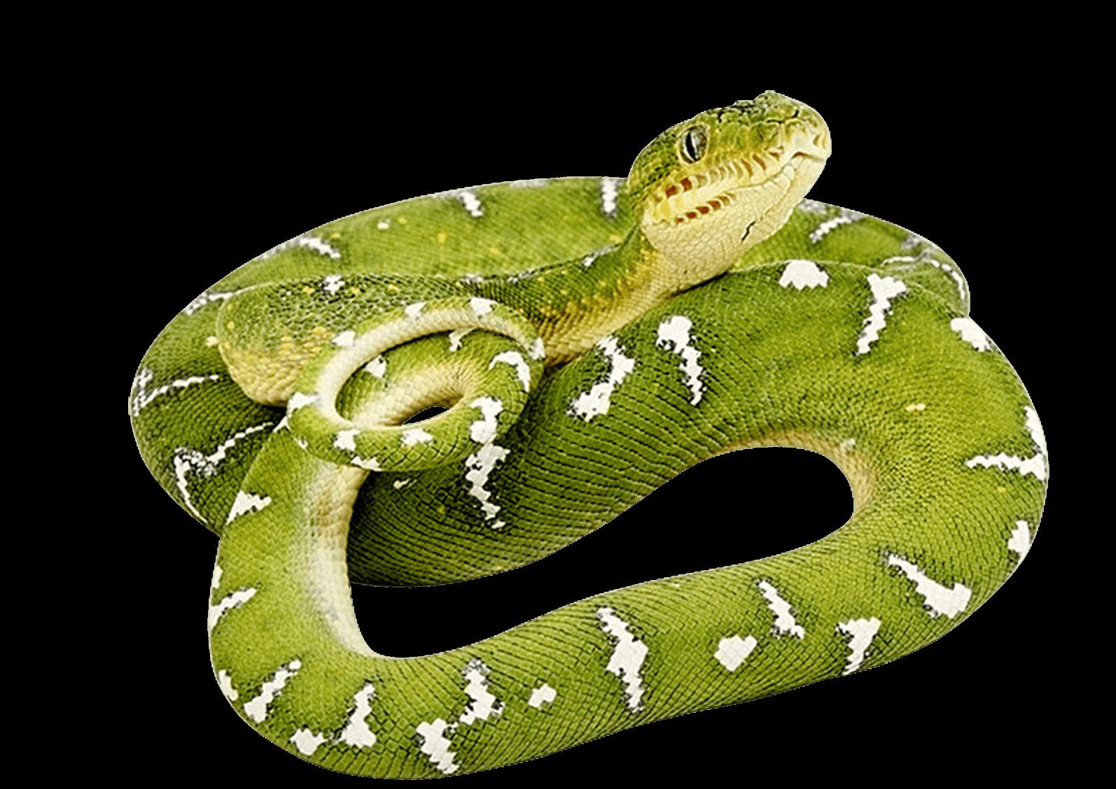Snake clipart flying snake. Green png image zv