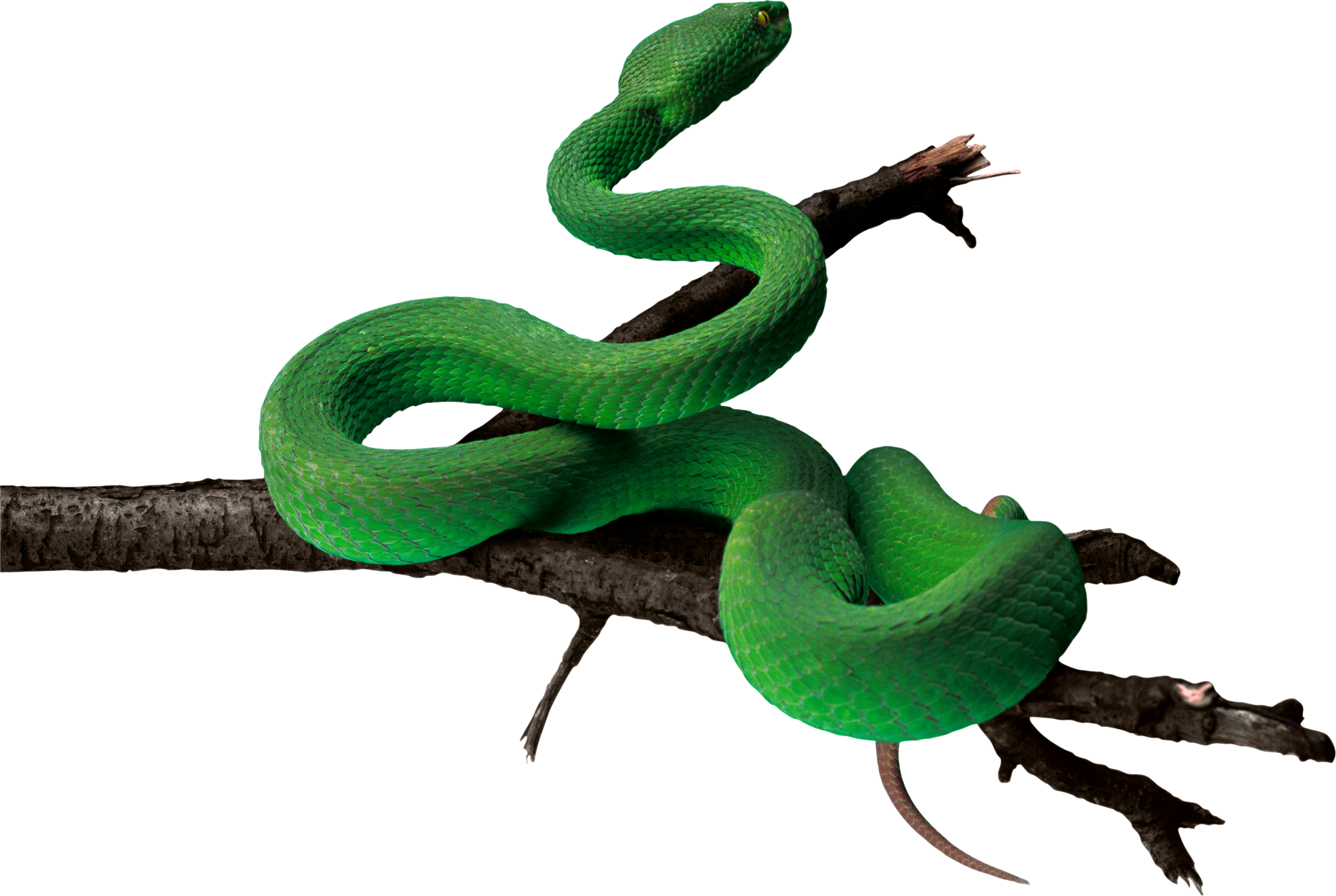Snake clipart shadow. Green png animal pinterest
