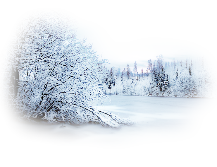Winter clipart forest.  a f b