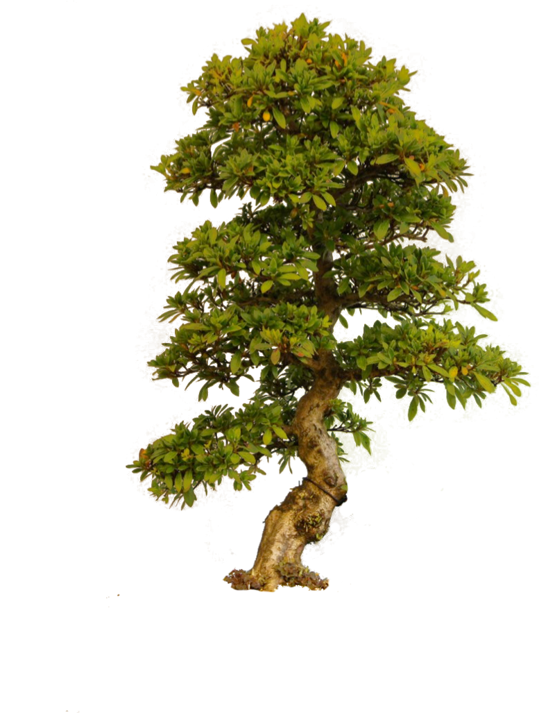 Outside clipart plant. Tree png by camelfobia